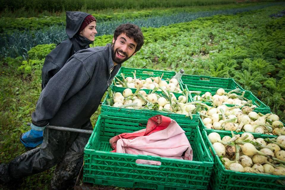 Aprire un'azienda agricola: 5 passi obbligatori da ...