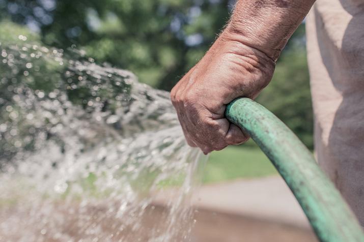 Bagnare regolarmente le piante da orto
