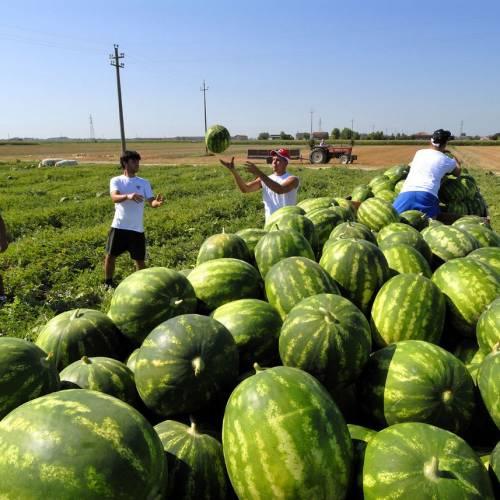 Lavoratori stagionali in agricoltura: come assumere senza voucher?
