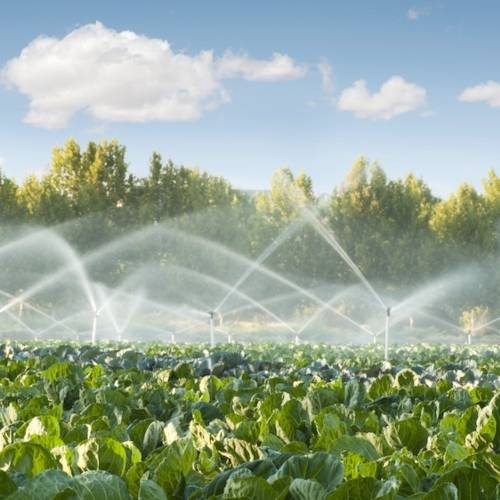 Eccessiva salinità dell'acqua di irrigazione: COSA FARE?