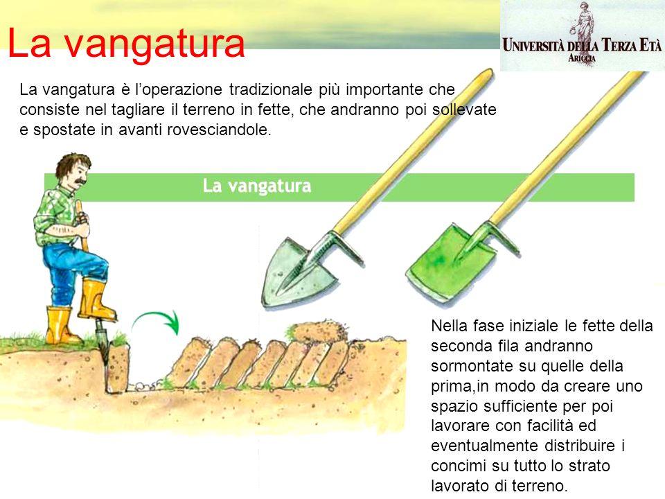 Come si esegue la vangatura del terreno. Fonte: Università della terza età
