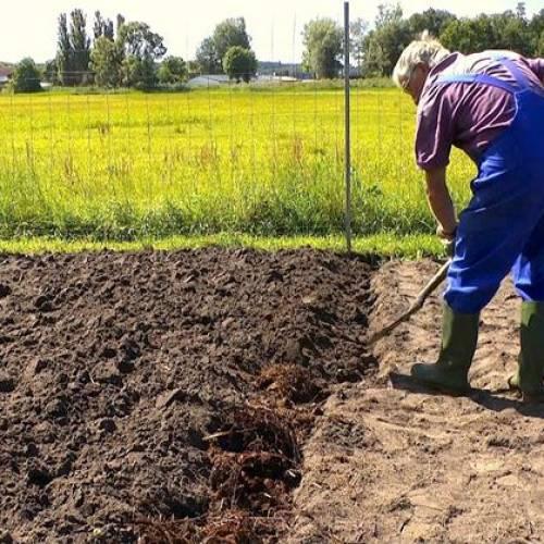 Vangatura del suolo. Prepariamo il terreno per l'inverno