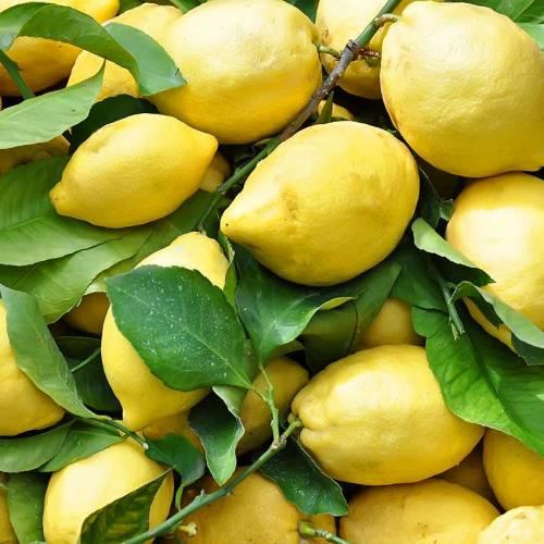 Il limone femminello e le altre varietà di limoni