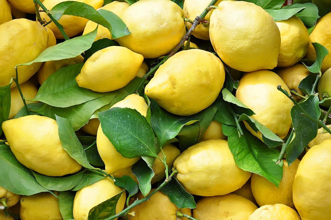 elegant shoes fashion style good selling Il limone femminello e le altre varietà di limoni ...